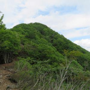 紅ドウダン咲く 小津権現山 (1,157.8M)     登頂 編