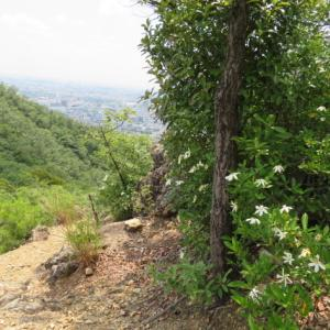 梅雨の晴れ間 金華山 (328.9M)  鷹ノ巣山下山 編