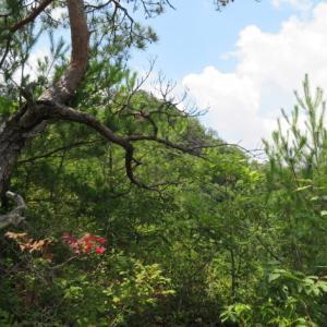 天気が良くなってきた 高木山 (344M)    登頂 編     PART 2