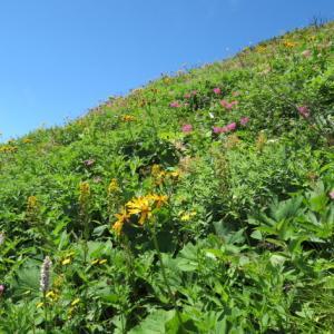 尾根道を花を見ながら登る 白山 (2,702.2M)     登頂 編 PART 5