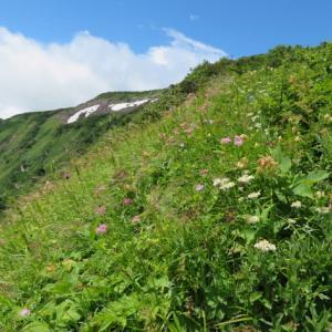 コバイケイソウ咲く 白山 (2,702.2M)    登頂 編  PART 6