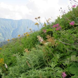 ようやく登山口に下山 白山 (2,702.2M)     下山 編