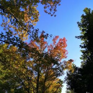 秋晴れの下、きれいな紅葉~☆