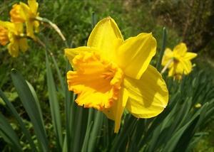 自粛要請を忘れて出かけた養老渓谷で出会ったお花