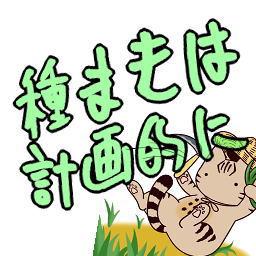家庭菜園 小松菜が大量&虫食い でも美味い!