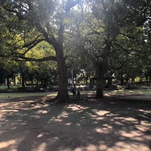 お気に入りの公園
