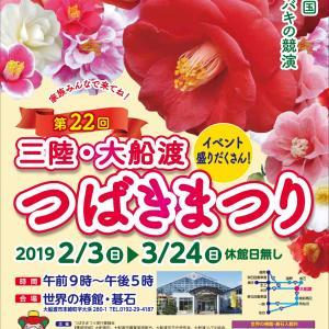【大船渡市】三陸・大船渡 第22回つばきまつりが開催されています。
