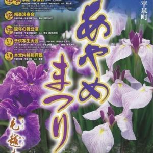 【平泉町】毛越寺あやめまつり。浄土庭園に咲く、300種3万株の花菖蒲。