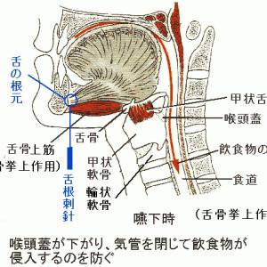 咽喉異常感症(咽頭神経症)の針灸治療・手技療法