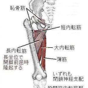 <下肢内側痛の鍼>の現代鍼灸からの検討(「秘法一本鍼伝書」に記述なし) Ver.1.2