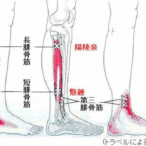 現代鍼灸でのツボの効かせかた②下肢部