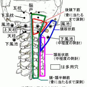 現代鍼灸でのツボの効かせかた③頸部編