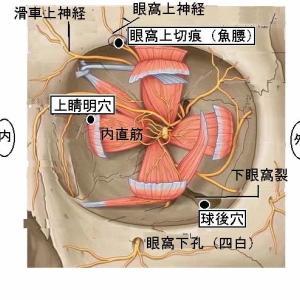 網膜色素変性症に対する針灸治験例(43歳男性 自営業)