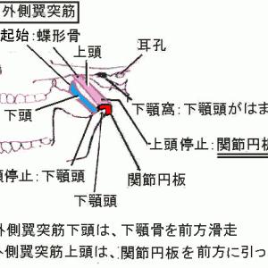 顎関節症に対する外側翼突筋と顎二腹筋への施術