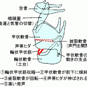 喉頭症状の現代鍼灸