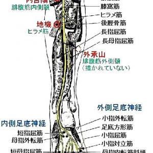 坐骨神経痛における下腿部治療点の検討
