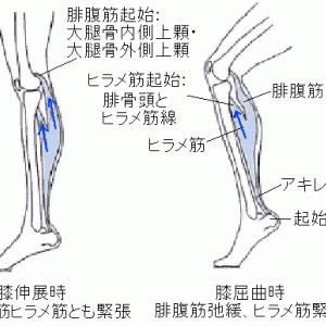 足底筋膜炎・モートン病・シンスプリント後内側型の鍼灸治療の共通点