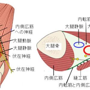 内転筋管と陰包刺針肢位