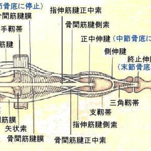 へバーデン結節の針灸治療 Ver.2.1