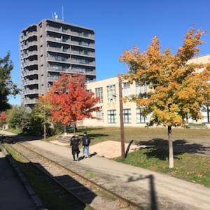市立小樽文学館・美術館横の旧手宮線散策路沿いが紅葉してます