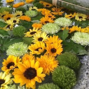 住吉神社の花手水の花が交換〜7月24日からはヒマワリ