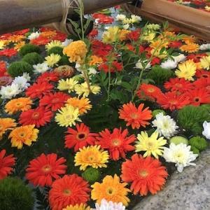 追加実施となった住吉神社の9月の花手水が始まっています〜花はガーベラがメイン