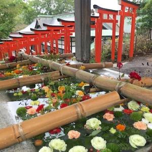 再び住吉神社の9月の花手水