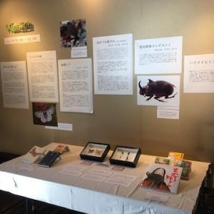 小樽市総合博物館運河館で展示「物語と昆虫」開催中(10月25日まで)【おたるBook Art Week 2020】