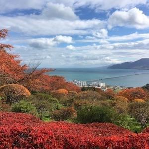手宮緑化植物園・手宮公園・小樽稲荷神社の紅葉(10月25日の様子)【小樽の紅葉2020】