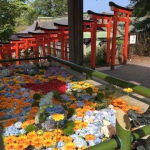 住吉神社の花手水、第5回目が始まってます〜花は紫陽花とガーベラがメイン(7月24日〜8月3日)
