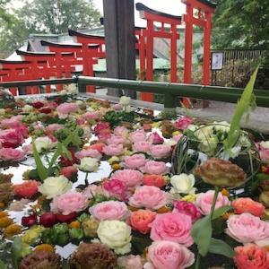 住吉神社の秋の花手水の開催が決まったようです!!日程は9月11日(土)〜9月23日(木)予定