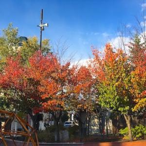 メルヘン交差点の木々が色づいてました(10月17日の様子)【小樽の紅葉2021】