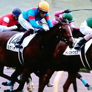 ◎良血愛馬ルナシオン、人気に応え新馬勝ち!