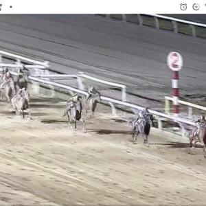 ◎愛馬トゥモローアンセム、船橋で9勝目!