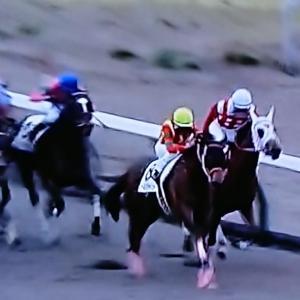 ◎愛馬ゴールドジャーニー、新潟で初勝利☆兄はダートGⅠ・5勝、種牡馬