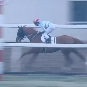 ◎愛馬アイルビーザワンが5月13日に浦和で勝利☆漏れていました