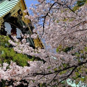 東高円寺・寺巡り 2020.4.3