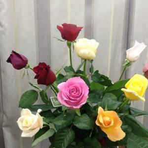 こんなにきれいな薔薇をお祝いに!