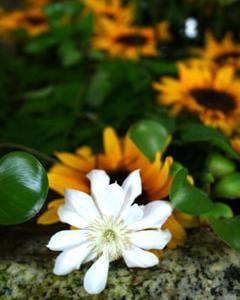 花の手水鉢