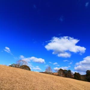 青空いっぱいの奈良公園