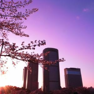 春色に染めて【最優秀賞】帝国ホテル大阪 第17回 桜写真コンテスト