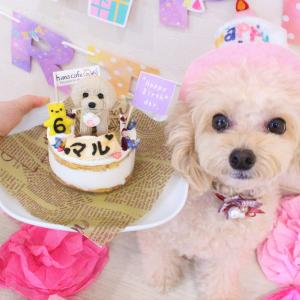 ♡♥マルちゃんHappyBIRTHDAY♥♡