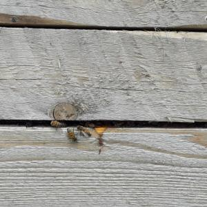 Happy Like a Honeybee