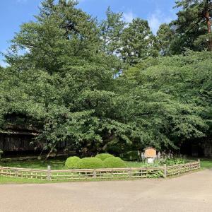 弘前公園の風景 2020.7.30(弘前市)
