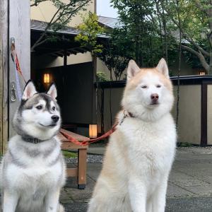 Goto トラベルでレジーナリゾート伊豆無鄰〜シベリアンハスキー