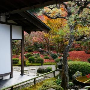 10年ぶりに京都・圓光寺の紅葉に再会す