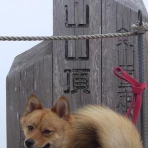 犬と登れるラムちん百名山登頂15座目は世界遺産の大峰山♪
