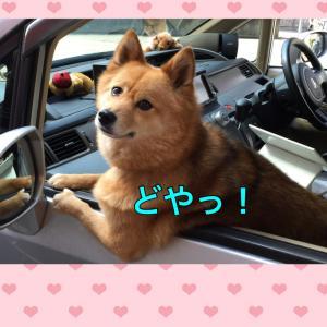 ラムちん新東名延伸コースでみたび焼津同期会?へ♪