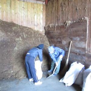 馬糞堆肥作り
