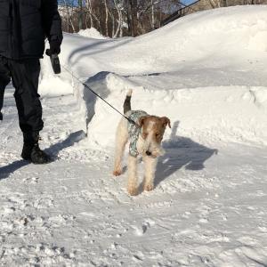 2回目スキー